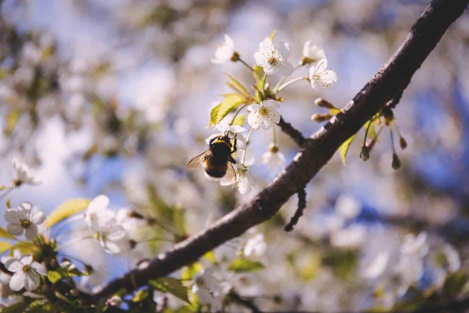 9 to 5 Wanderlust bees